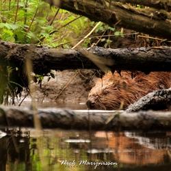 Hidden in the wildernis