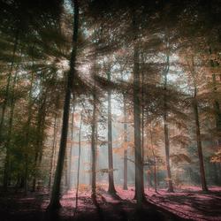 boslicht