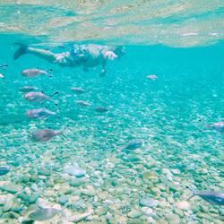 Vissen en snorkelaar