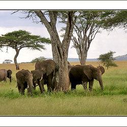 Bewerking: Familie olifant 2