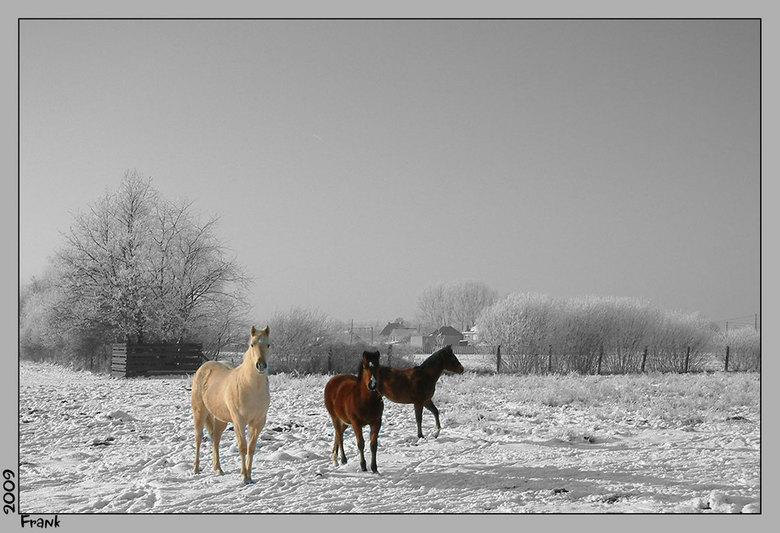 Wild White West -
