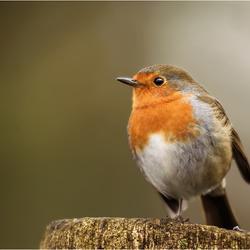 Robin One Leg....