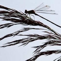 lichte vleugelschade