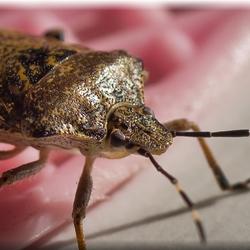 ''Big Bug''