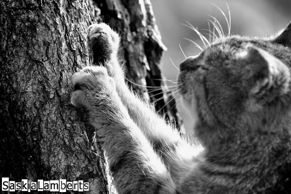 Mara - Onze Mara scherpt zijn nagels