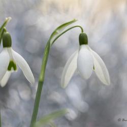 Let the spring begin