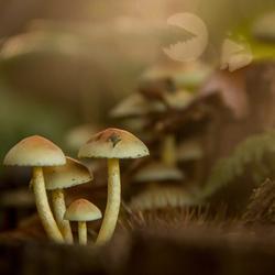 'Pacman' zoekt paddenstoel