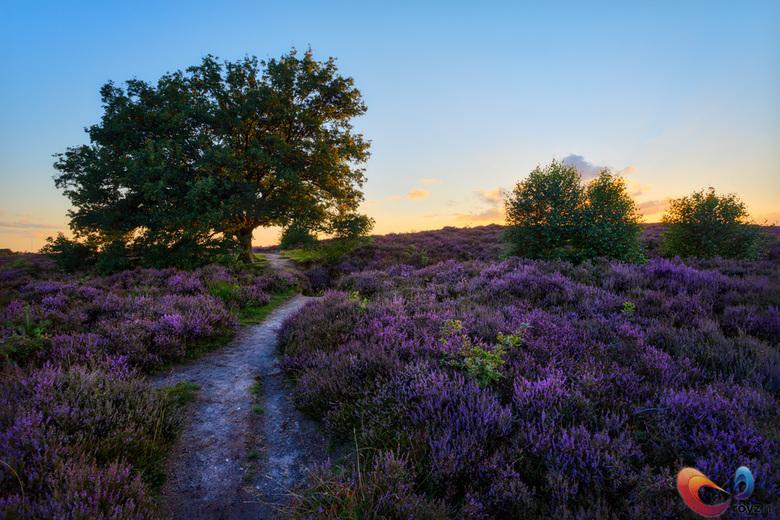 Posbank - De paarse bloemen staan er weer goed bij.