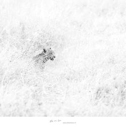 Kleintje luipaard.