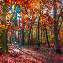 Birkhoven Amersfoort herfst