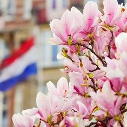 Magnoli Amsterdam