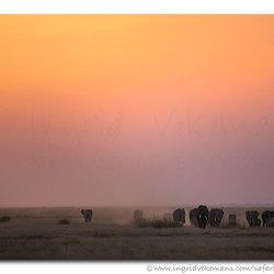 Amboseli Colours