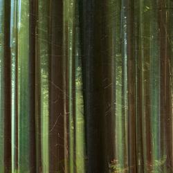 Het bos tussen de bomen . . .