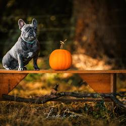 Mister autumn