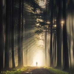 Sunlight runner
