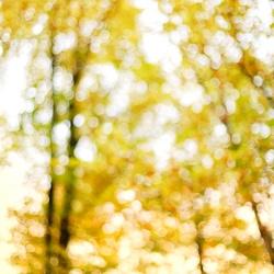 Creatieve herfst