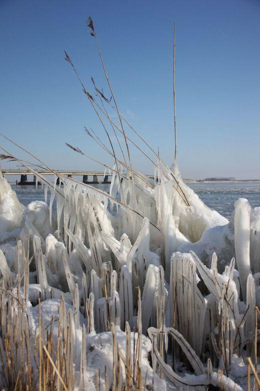 ijzig riet - De wind in combinatie met de vorst maakt van het riet wel een mooi schouwspel.