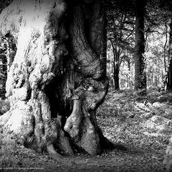 Een werkboom in het bos