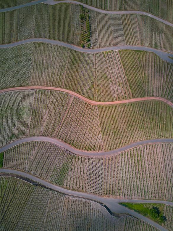 Wijngaarden, Krov Duitsland