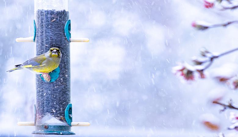 7855 in de sneeuw -   de silo wordt druk bezocht