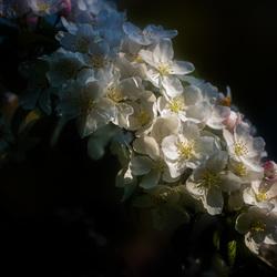 Bloesem-lente-arboretum Bel Monte