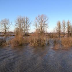 Hoogwater in de Ooijpolder