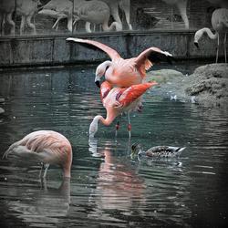 Flamingofeestje