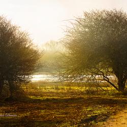 Natuurgebied Oranjezon Vrouwenpolder