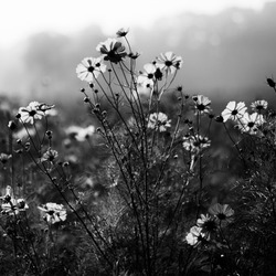 Mysterious Flowers...