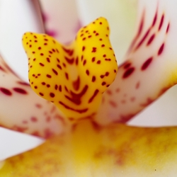 Orchidee (02)
