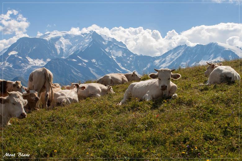 Mont Blanc - We zijn de Mont Joux opgegaan, van waaruit je een mooi zicht heb op de Mont Blanc.