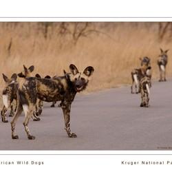 Hyena honden