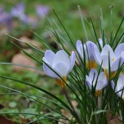 Begin van de lente in regio Stichtse Vecht