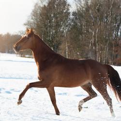 Heerlijk in de Sneeuw