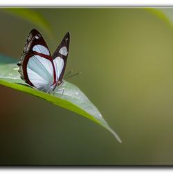 Vlinders Peru