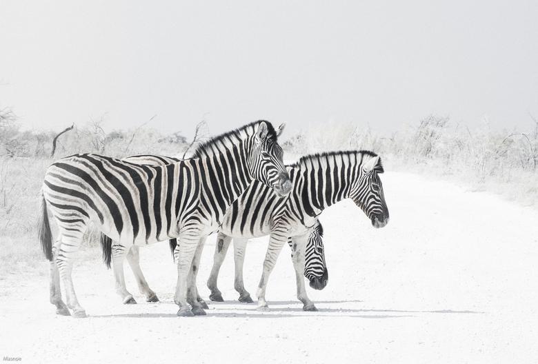 Zebra's -