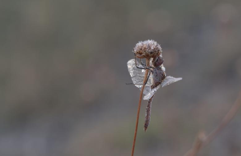 """Waiting for the sun ...... - Uurtje wezen """"dauwtrappen"""" en enkele leuke plaatjes kunnen schieten waaronder deze van een heidelibel."""