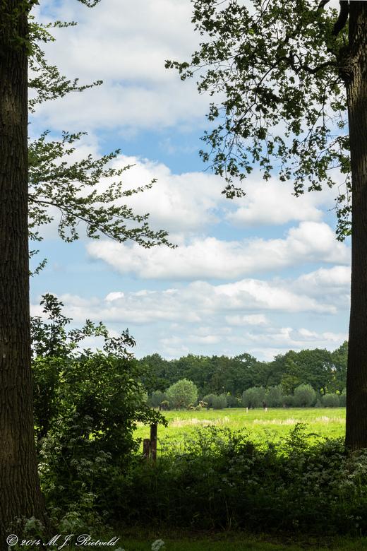 Veld achter het bos - Al jaren lang loop ik langs deze doorkijk. Dit is de eerste keer dat ik het vast heb gelegd. Dit was een van de weinige point-an