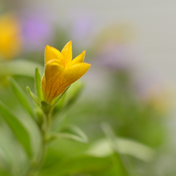 kleintje geel