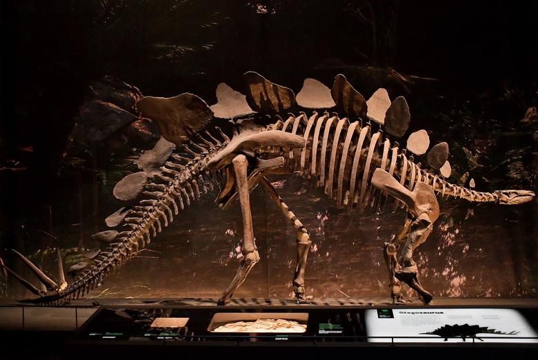 Stegosaurus - Gister in het vernieuwede Naturalis in Leiden geweest. Wat een mooi gebouw is dat geworden, en hoe mooi hebben ze alles neer gezet.... D