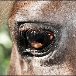 What's in a horses eye.jpg