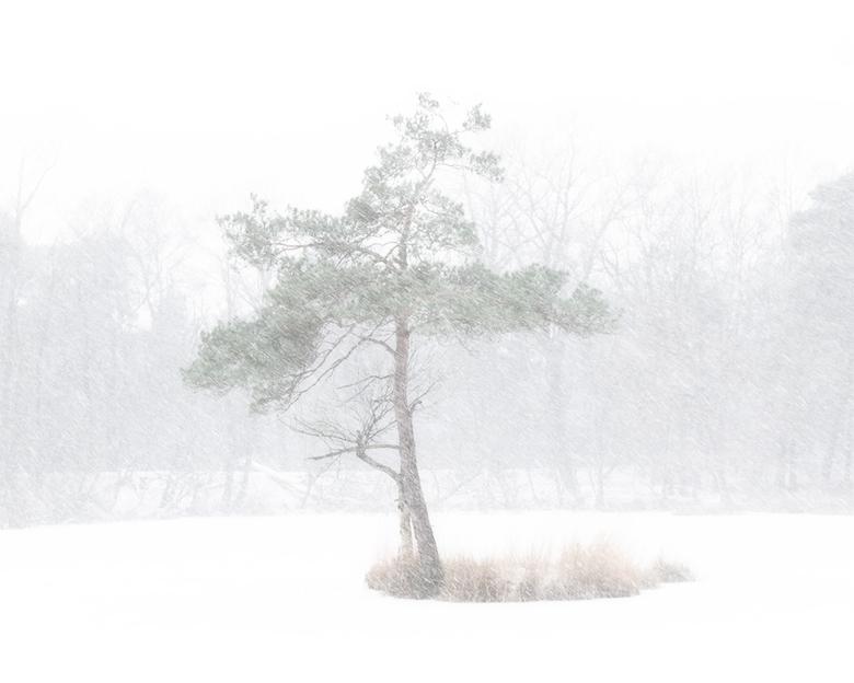Let it snow - De kansen op sneeuw nemen voorzichtig toe in de nieuwe week. Hopelijk kunnen we weer net zo genieten als vorige in januari tijdens een s