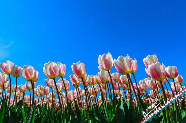 Genieten in de zon - Het kan soms niet lang genoeg lente blijven ....