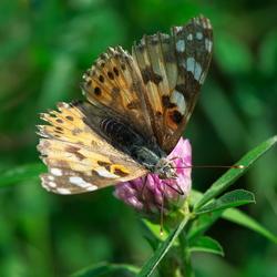 en ja alweer een vlinder :-)