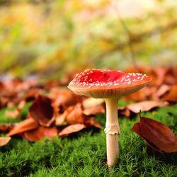 Herfst wat heb je mooie kleuren