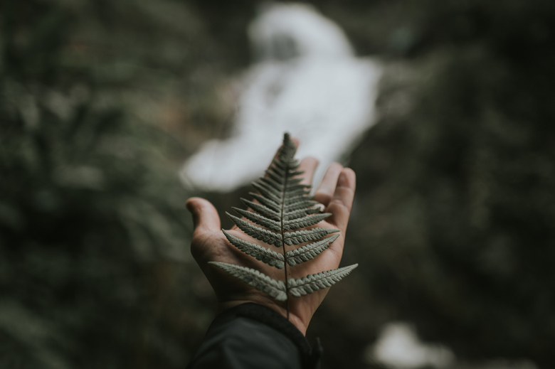 Bokeh leaf.