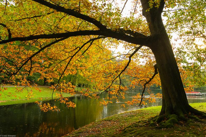 Herfst - Tegenlicht opname van eik in herfstkleuren.