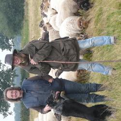 herder (innen) op de heide in Drenthe