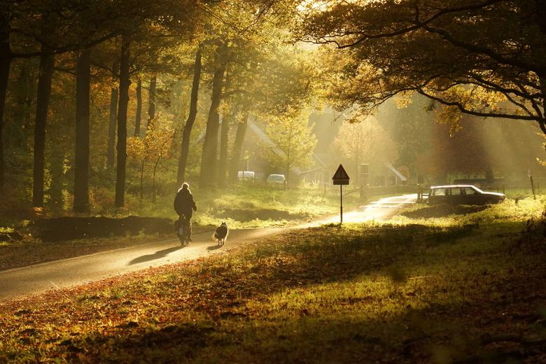 Herfstige dag - Toen ik vandaag naar het Rozendaalse bos fietste moest ik onderweg wel stoppen om dit fabelachtige licht vast te kunnen leggen. Wat wa