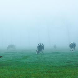 Misty Grazers